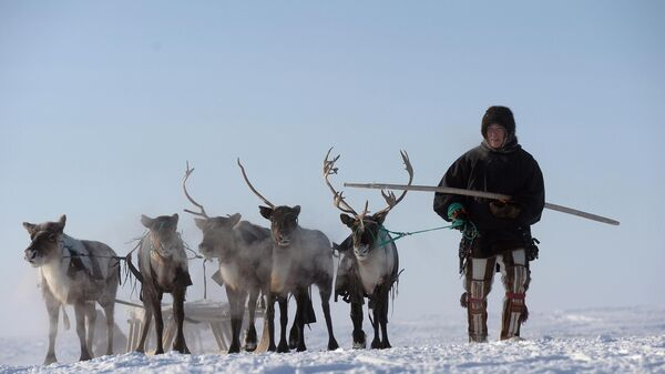 Оленевод в Салехарде, Ямало-Ненецкий АО