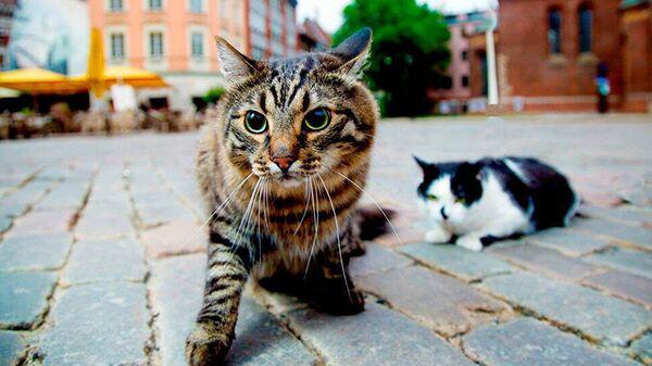 Официальные рижские коты Кузя и Мурис