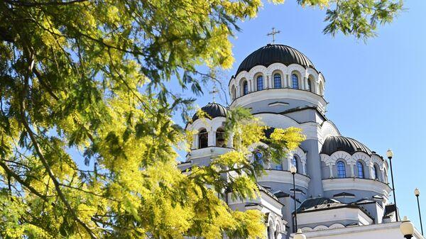 Цветущее дерево мимозы во дворе Храма Нерукотворного Образа Христа Спасителя в Сочи