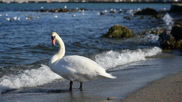 Лебедь на набережной в Феодосии
