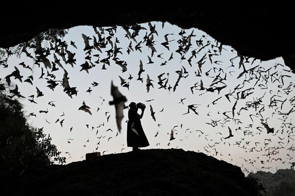 Женщина отпугивает летучих мышей в Пхаане