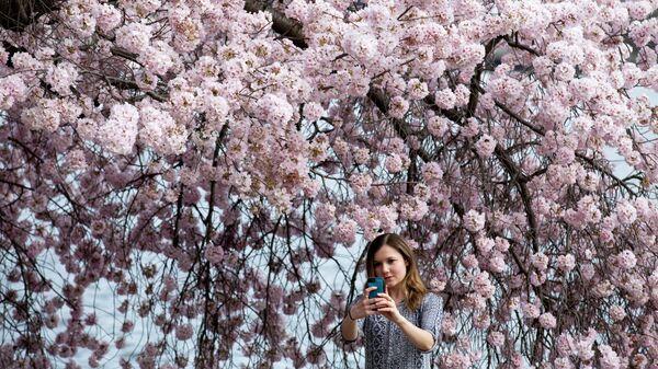 Девушка фотографируется с цветущей сакурой в Вашингтоне