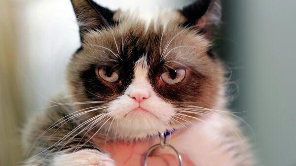 Сердитый кот (Grumpy Cat)