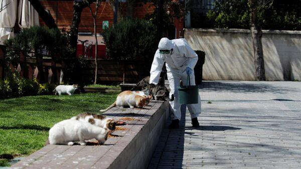 Работник муниципалитета в защитном костюме кормит уличных кошек на площади Султанахмет в Стамбуле, Турция