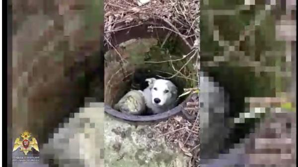 Росгвардеец в Москве спас собаку, упавшую в коллектор