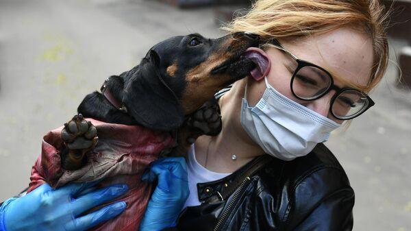 Волонтер выгуливает собаку породы такса в Москве