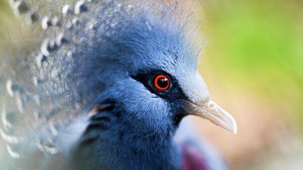 Крупнейший в России парк птиц Воробьи попросил о помощи в содержании питомцев