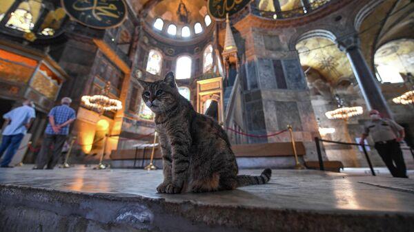 Кошка в соборе Святой Софии в Стамбуле
