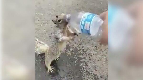 Стоп-кадр видео, где белка пьет воду из бутылки в Индии