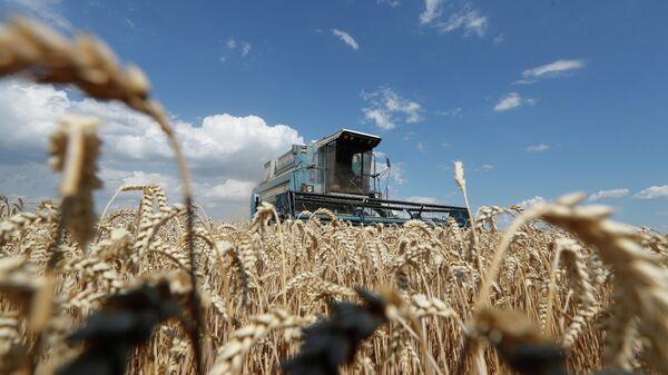 Уборка пшеницы на поле в Киевской области