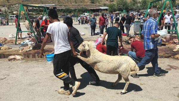 Празднование Курбан-байрама в Турции в условиях пандемии