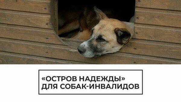 """""""Остров надежды"""": приют, где выхаживают собак-инвалидов"""