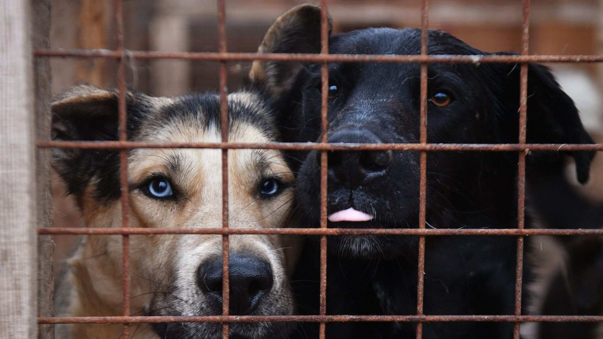 Собаки в вольере приюта для бездомных животных в Москве - РИА Новости, 1920, 11.01.2021