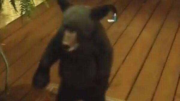 Медвежонок заглядывает в дом