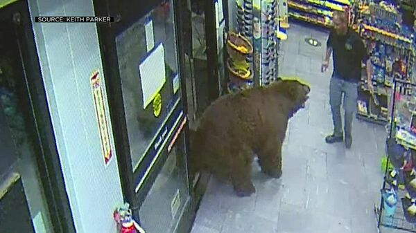 Медведь-воришка зашел в магазин