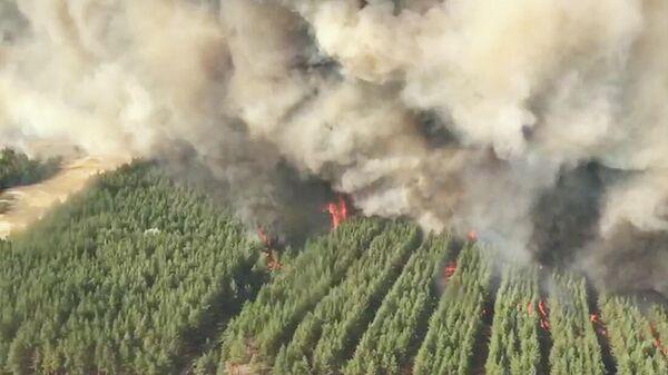 Лесной пожар в Ростовской области