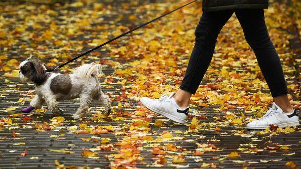 Девушка с собакой в сквере в центре Новосибирска