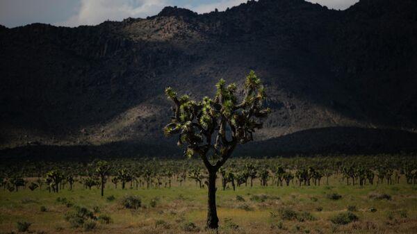 Дерево в Национальном парке