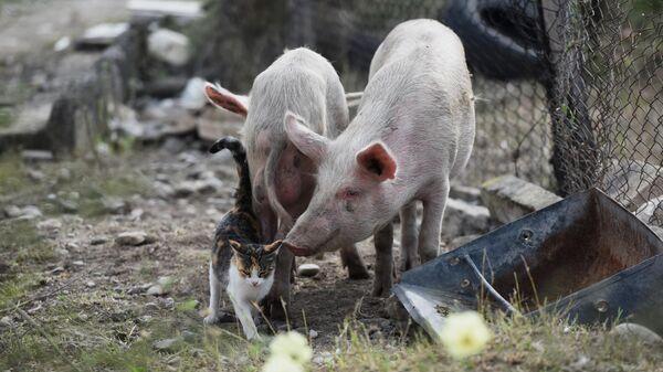 Животные на улице в Мартакерте, пострадавшем в результате обстрела