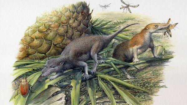 Первые млекопитающие: Morganucodon (слева) и Kuehneotherium (справа)