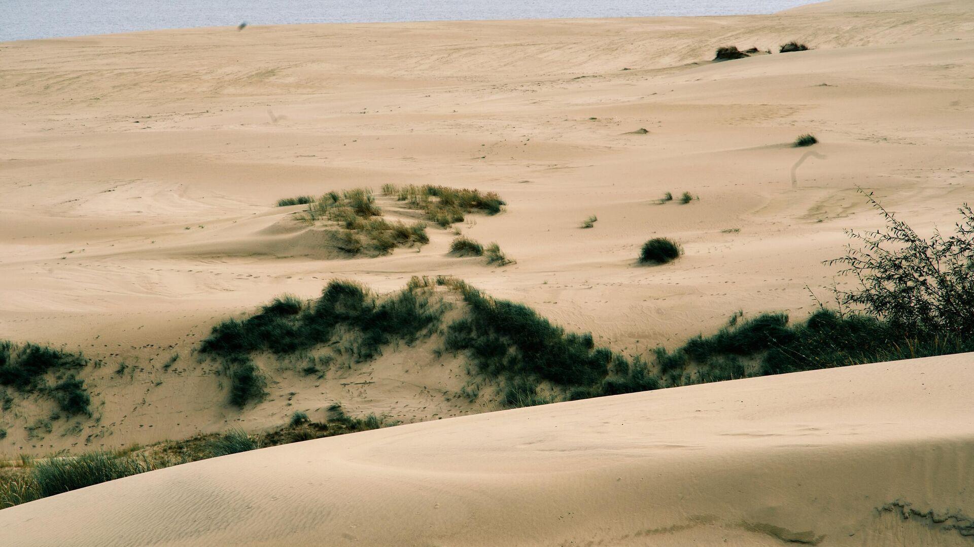 Вид на дюны с высоты Эфа в национальном парке Куршская коса в Калининградской области - РИА Новости, 1920, 29.07.2021
