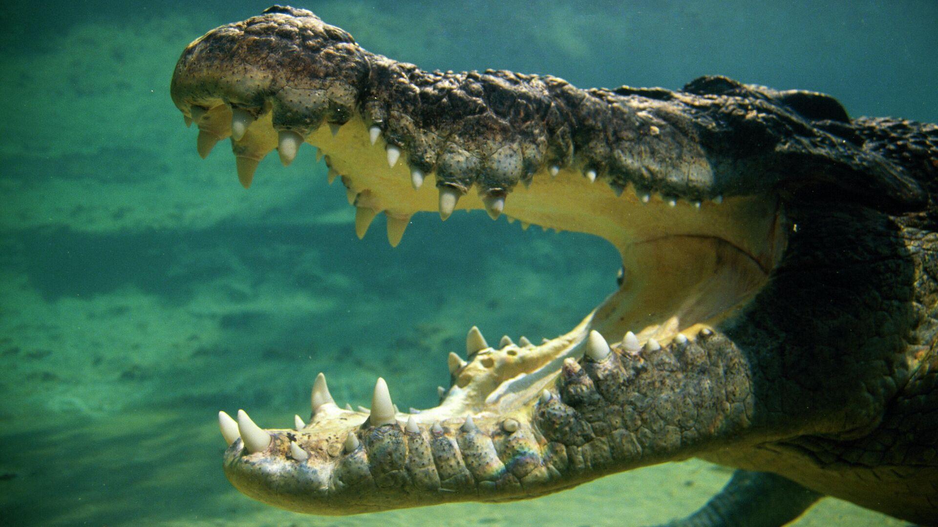 Крокодил под водой - РИА Новости, 1920, 07.08.2021