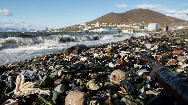 Мертвые морские животные на берегу, Камчатка