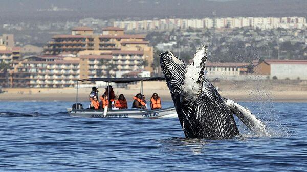 Люди смотрят, как горбатый кит выпрыгивает из воды в Лос-Кабосе, Мексика
