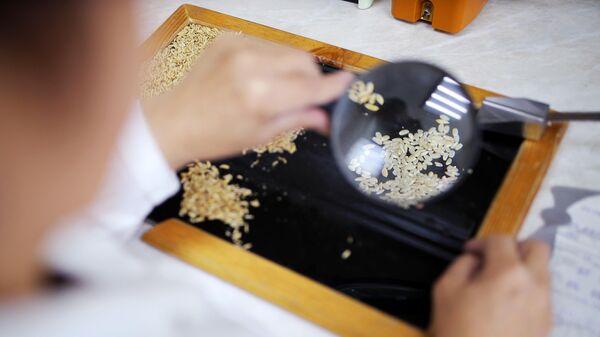 Проверка риса в лаборатории