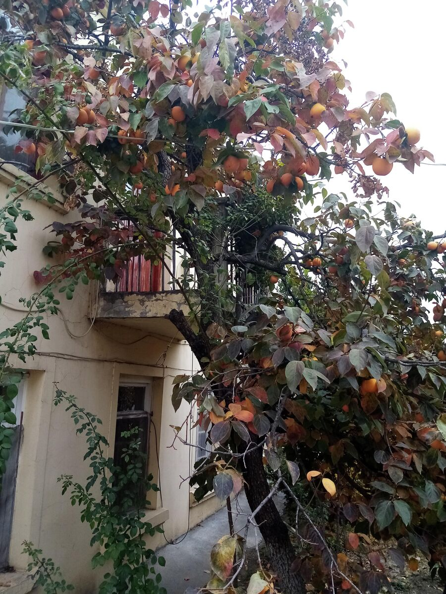 Во дворе жилого дома в Степанакерте