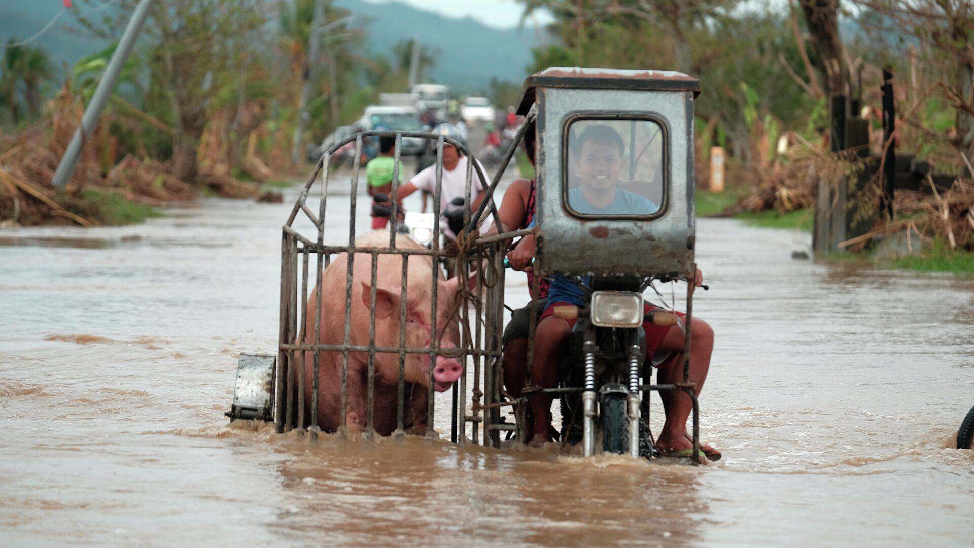 Мотоциклист везет свинью по затопленной дороге в провинции Албай на Филиппинах  - РИА Новости, 1920, 18.11.2020