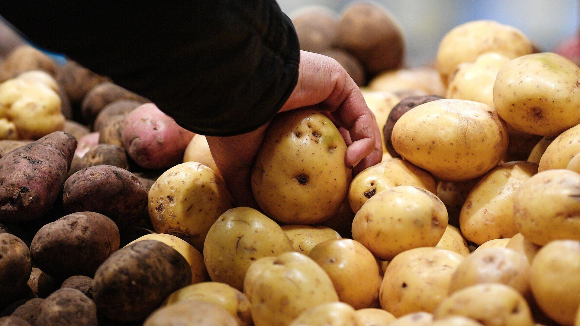 Росстат: картофель за неделю подорожал на 1,77 процента