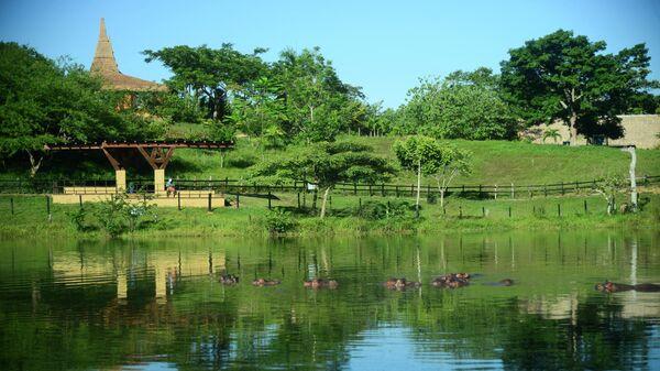 Бегемоты в бывшем частном зоопарке наркобарона Пабло Эскобара на его ранчо Неаполь в Колумбии