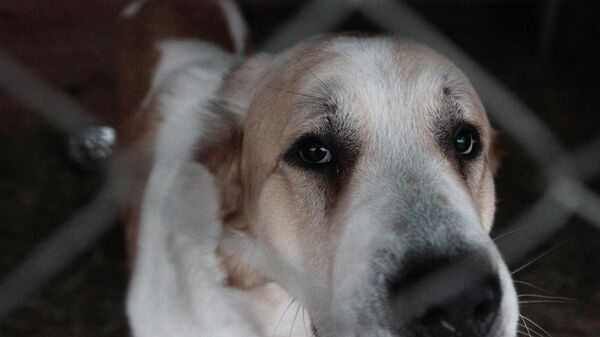 Бездомная собака в приюте В добрые руки