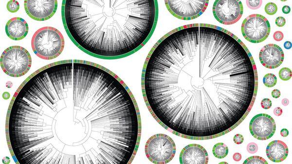 Филогенетические деревья, начинающиеся с отдельной раковой клетки. Цвет обозначает орган или место в теле - многоцветные круги соответствуют высокометастатическим фенотипам