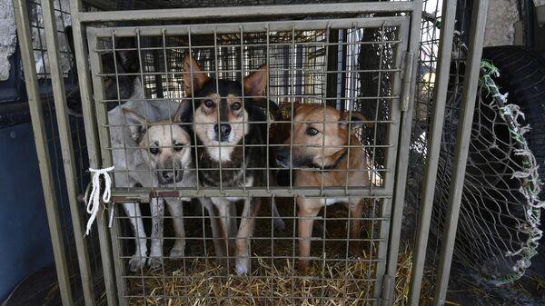Пойманные беспризорные собаки в кузове микроавтобуса общественной благотворительной организации Бездомный пёс во время рейда по отлову бродячих животных в Красноярске