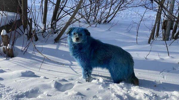 Синие собаки на территории завода Оргстекло в городе Дзержинске Нижегородской области