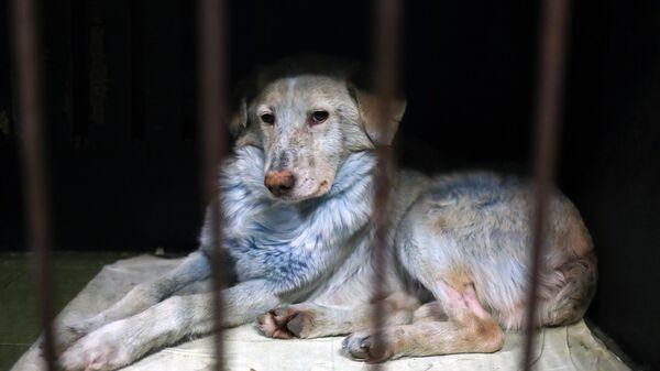 Собака, найденная в Дзержинске, в ветеринарном госпитале Зоозащита-НН