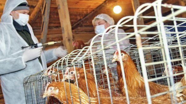 Вакцинация птицы на частных подворьях