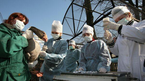 Вакцинация птиц против вируса птичьего гриппа