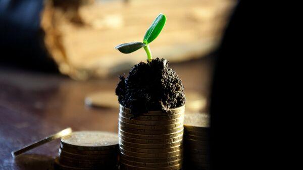 Растение на монетах