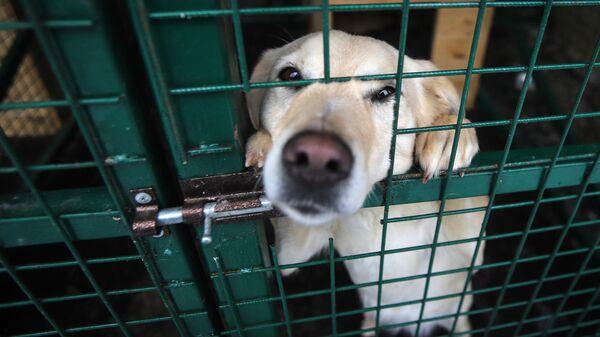 Бродячая собака в вольере приюта для бездомных животных Владпитомник во Владикавказе