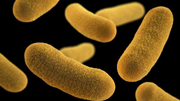 Бактерии Yersinia enterocolitica