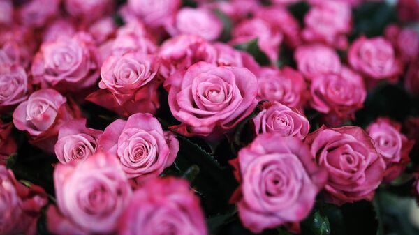 Розы, выращенные в тепличном комплексе Зелёный Дом
