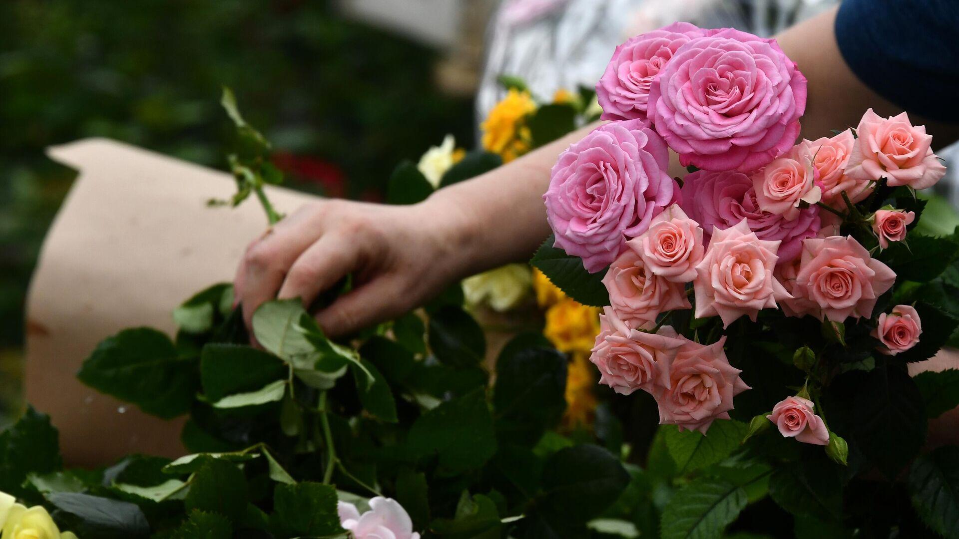 Сотрудница держит в руках розы, выращенные к Международному женскому дню на предприятии ГБУ Озеленение в Московской области - РИА Новости, 1920, 23.03.2021