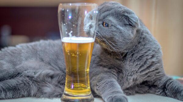 Кошка и стакан с пивом