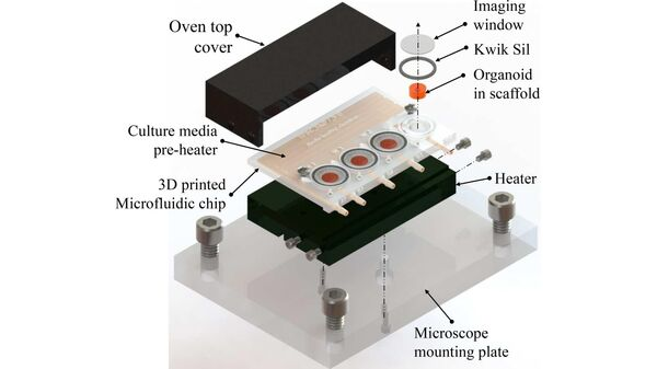 Напечатанный на 3D-принтере микрофлюидный биореактор для культивирования клеточных органоидов