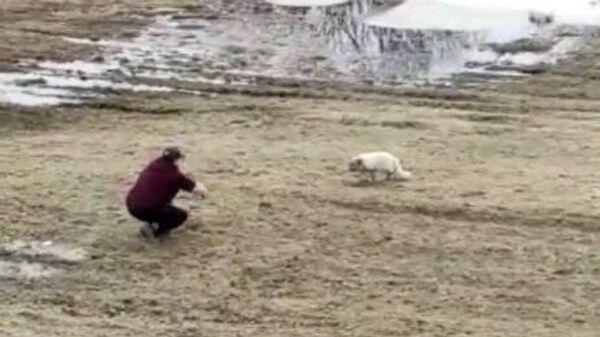 Юлия подкрадывается к песцу