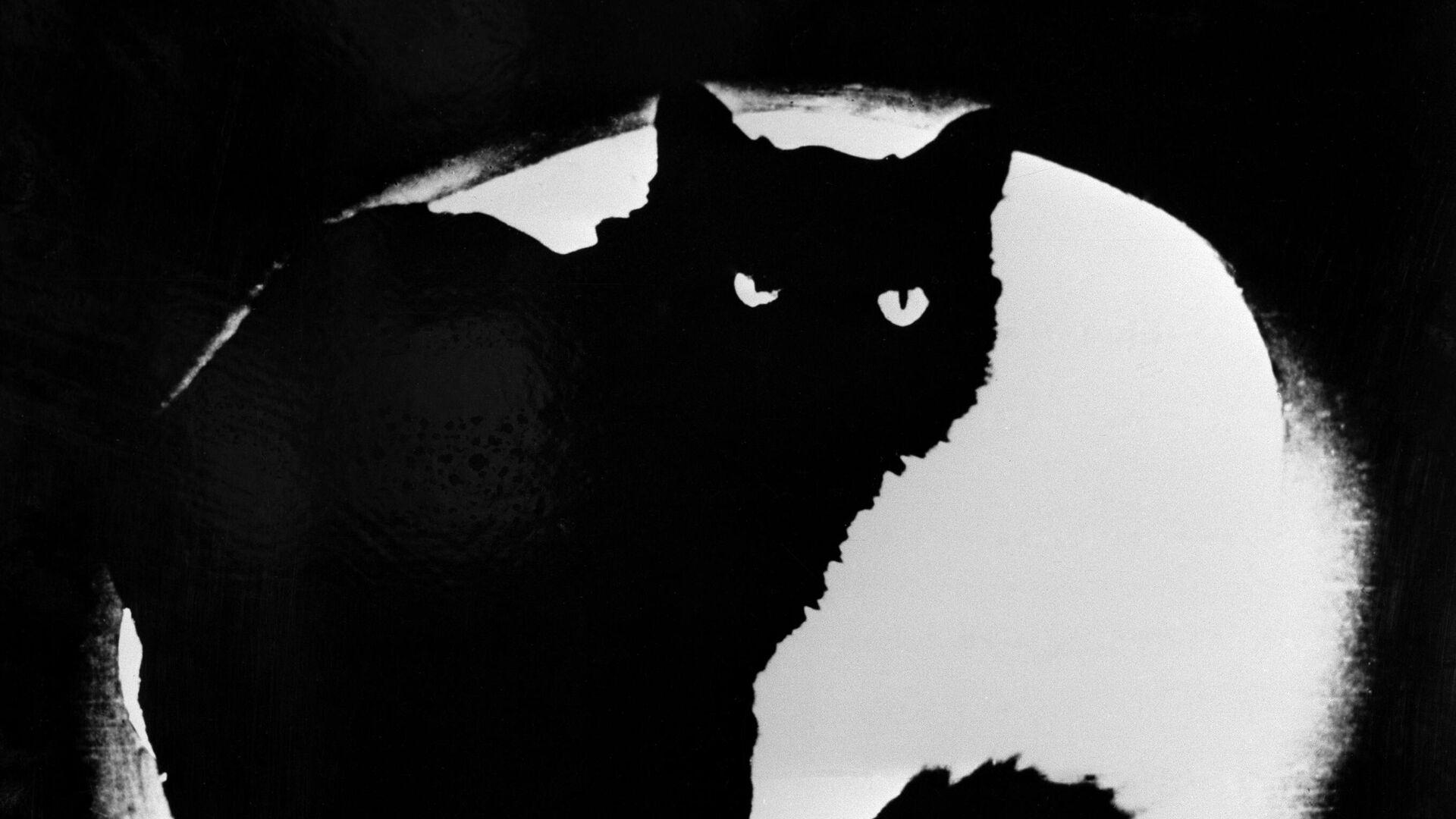 Репродукция фотографии Черный кот - РИА Новости, 1920, 11.04.2021