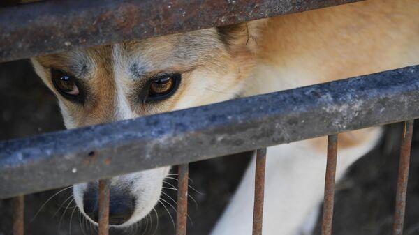 Ветеринарная станция и приют для бродячих собак